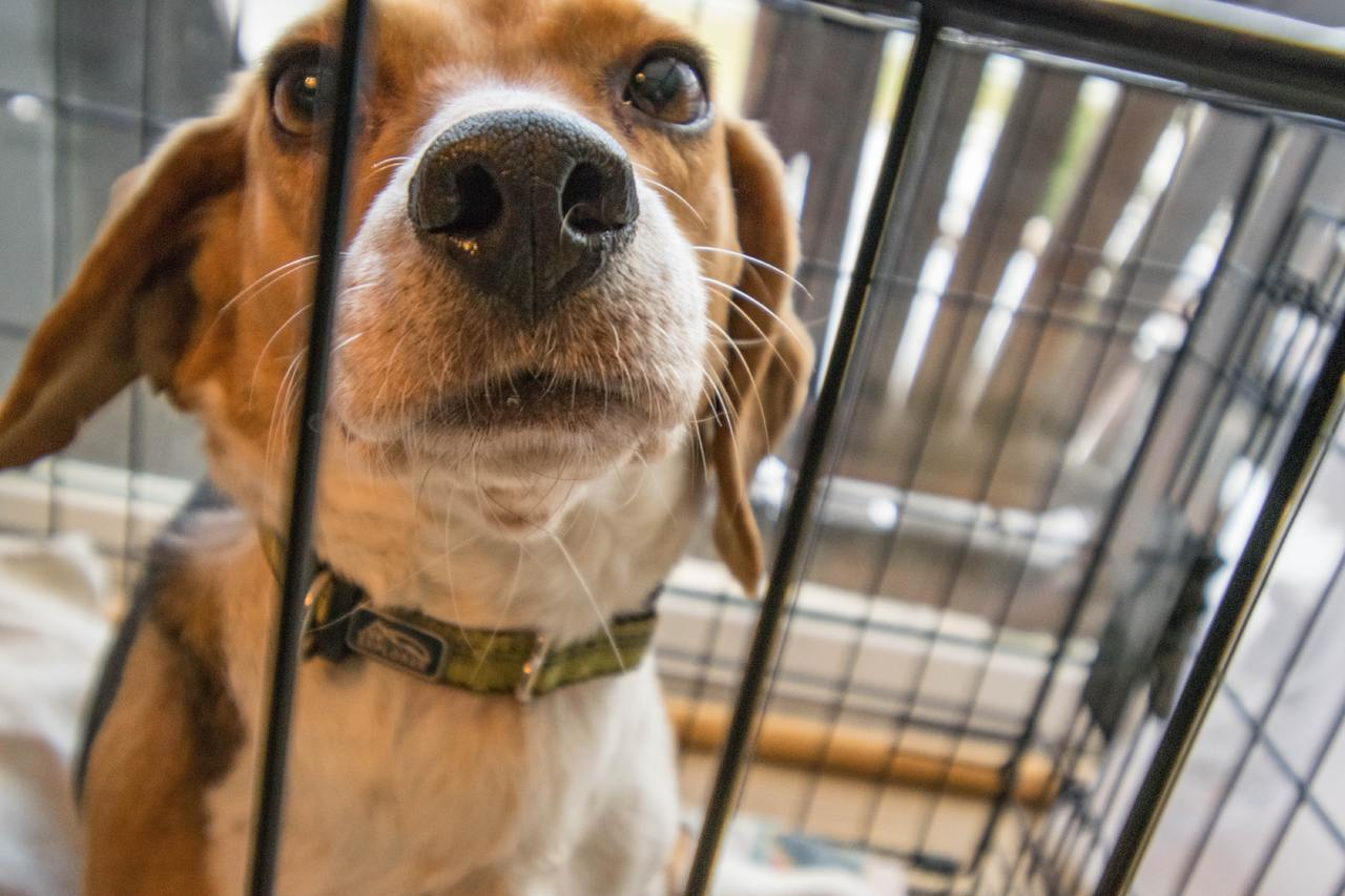 chien en cage d'intérieur